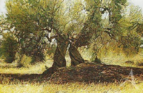 """Farbradierung """"Olivenbäume IV"""", Günther Hermann"""