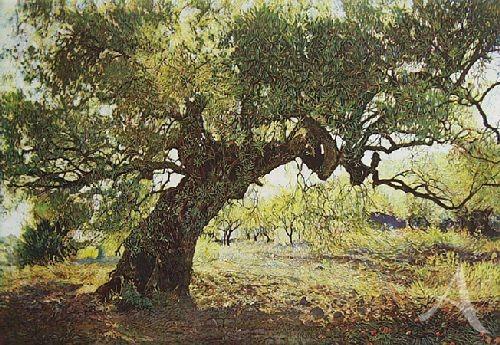 "Farbradierung ""Olivenbaum V"", Günther Hermann"