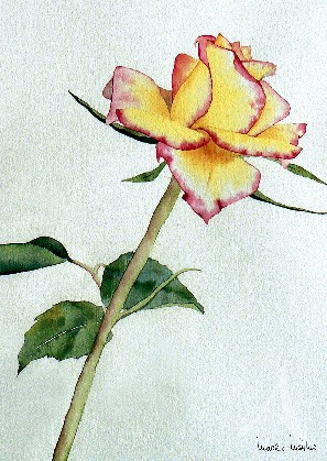 "Postkarte ""Rose Gloria Dei"""