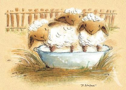 """Postkarte """"Schafe in der Wanne"""""""