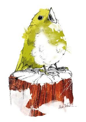 """Postkarte """"Kleines Vögelchen"""""""