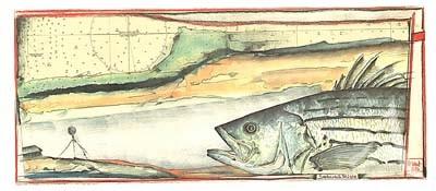 "Postkarte, ""SeebarschKüste"" , DIN lang"