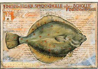 """Postkarte """"Finkenwerder Speckscholle"""""""