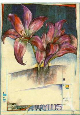 "Postkarte ""Amaryllis"""